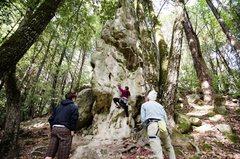 Rock Climbing Photo: Lyme Disease Rock, Ticks Ripped My Flesh 5.10b
