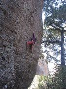 Rock Climbing Photo: Climbing at the pinnacles