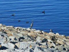 Rock Climbing Photo: Local wildlife, Lake Perris SRA