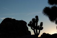 Rock Climbing Photo: J Tree Sunset near Hidden Valley Campground