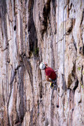 Rock Climbing Photo: Eying the crux of the Bell
