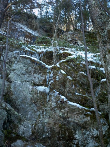 The dry and mossy line of Frozen Nature