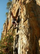 Rock Climbing Photo: Red Wall  Opinionated(5.9+) sport  Crowders Mounta...