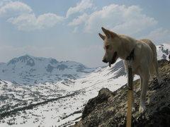 Rock Climbing Photo: Even Jaxon likes the alpine!