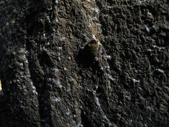 Rock Climbing Photo: The Roach
