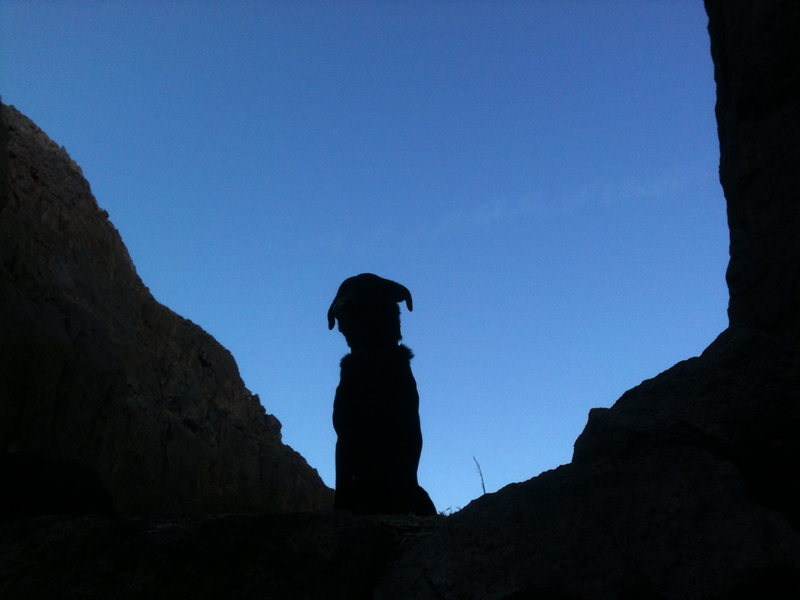 Duke watching me climb at Owens River Gorge. He was concerned about the hanging belay over the water.