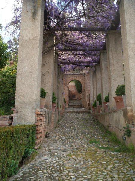 Garden for Kings