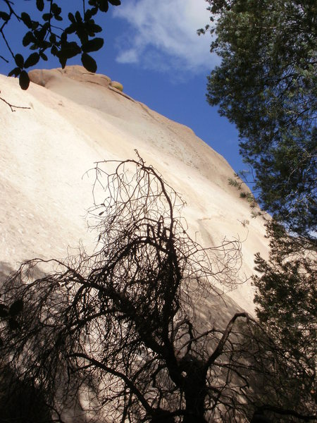 Rock Climbing Photo: Looking up at What's My Line?