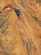 Rock Climbing Photo: Lynn Sanson nearing the top.
