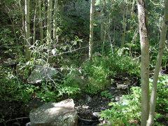 Rock Climbing Photo: the Hiking Path in Toni Gulch