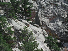 Rock Climbing Photo: Bighorn Sheep below the west summit of Reese  Summ...