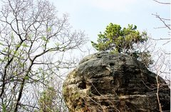 Rock Climbing Photo: At the top of the trail is the area called the &qu...