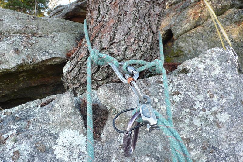 Rock Climbing Photo: On tree.