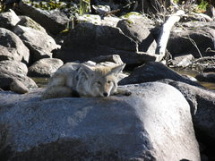 Rock Climbing Photo: A coyote watches all this action