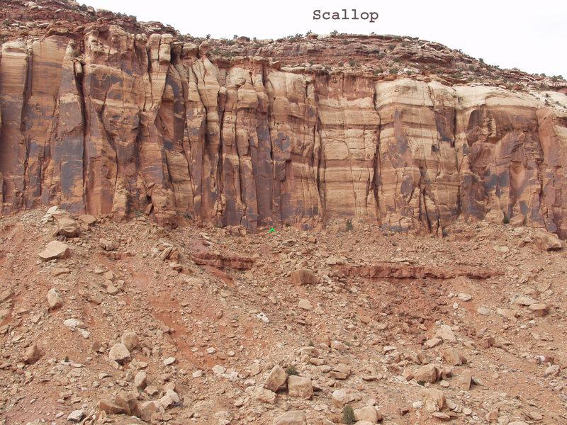 Location of Scallop