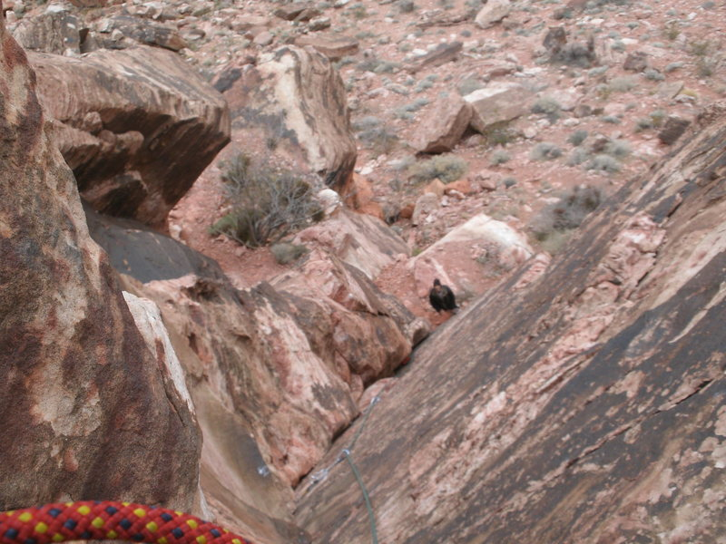 Rock Climbing Photo: a look down the end of the climb