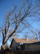 Rock Climbing Photo: Tree over our house! Feb 25th 2012.