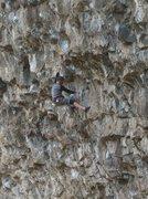 Rock Climbing Photo: Ross Callison on Fugitive