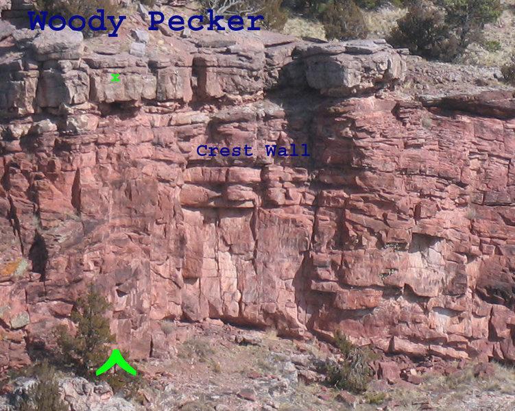 Rock Climbing Photo: Woody Pecker