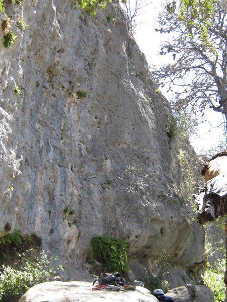 Rock Climbing Photo: Mrs. Johnson above the white helmet.