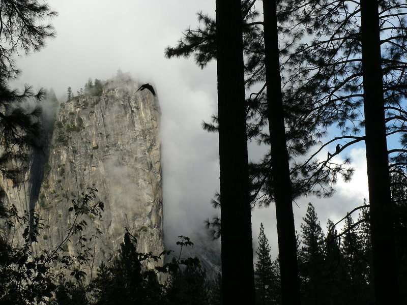 Rock Climbing Photo: Looking at Washington Column from my tent steps on...