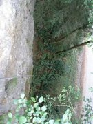 Rock Climbing Photo: This is the wall that can be rappelled. It is very...