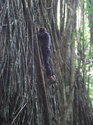 Scaling a 7 meter tall monolith, covered by a gnarly and slippery root lattice. Gunung Kajang, Tioman, Malaysia.