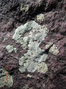 Rock Climbing Photo: That Lichen.