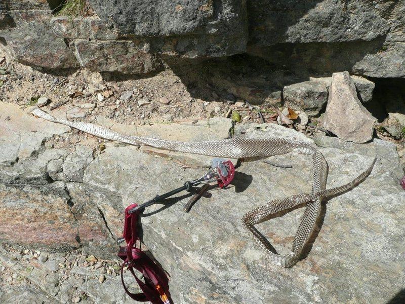 Rock Climbing Photo: Gunks snake skin.