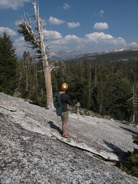 Rock Climbing Photo: the mystery tree on the descent from Fairview...