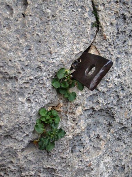 Rock Climbing Photo: Pin at Rocca di Corno's Settore Sud-Est