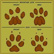 Rock Climbing Photo: Lion vs. dog print.