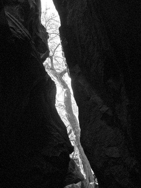 Rock Climbing Photo: Tree in the gap