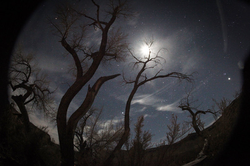 Amazing camping in the Cottonwoods..