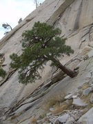 Rock Climbing Photo: When you reach this cool tree, you're near the sta...
