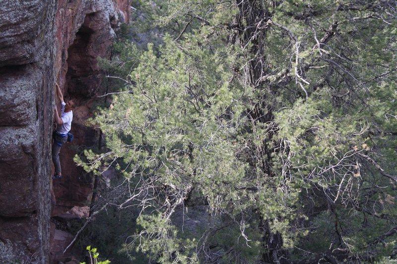 Rock Climbing Photo: Chris working MDC