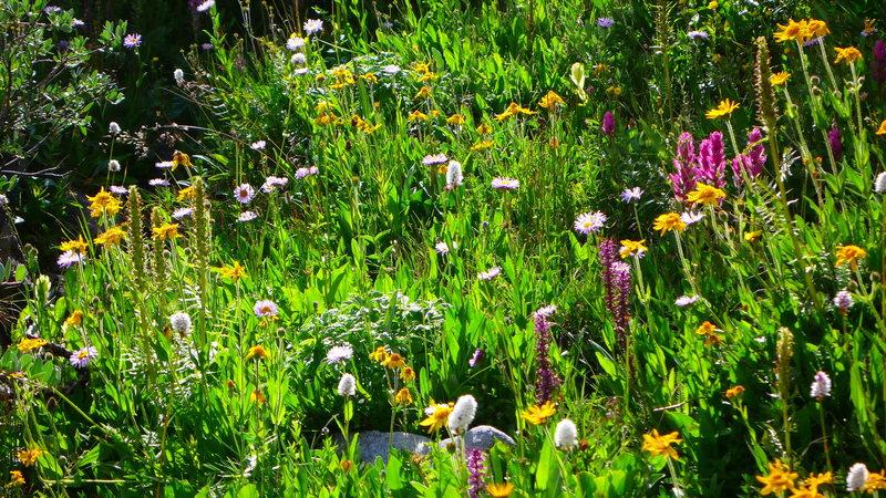 Shelf lake, flowers