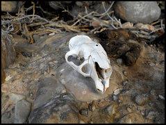 Rock Climbing Photo: The Rattle Horn