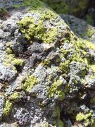 Rock Climbing Photo: chimney lichen up close and personal