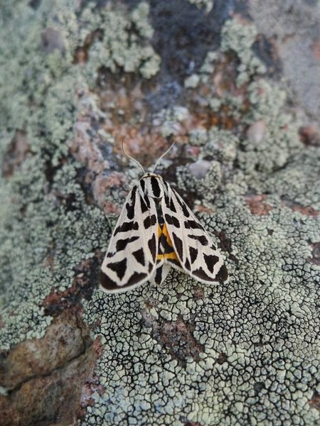 Rock Climbing Photo: Moth or butterfly I found near the start.