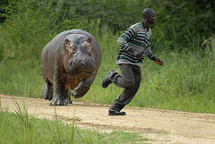 Rock Climbing Photo: Hippos kill people
