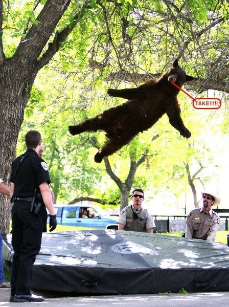 Take Bear!
