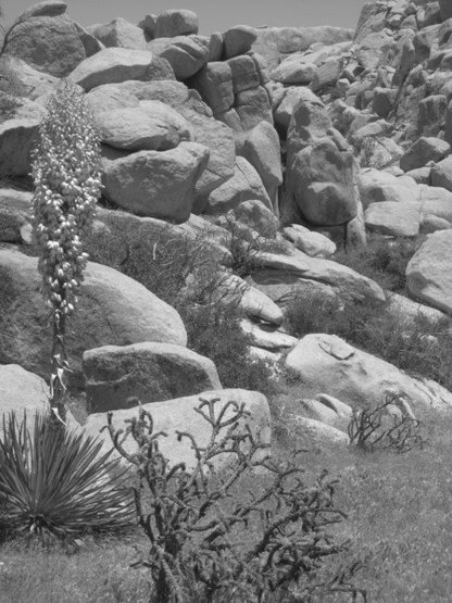 Rock Climbing Photo: Boulders galore