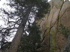 Rock Climbing Photo: The route splits the lichen at the start and trave...