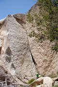 Rock Climbing Photo: Getting Smaller, .10b Grapevine area in High Deser...