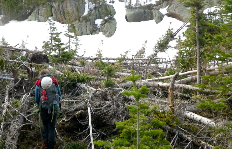 MAJOR tree fall will add at least 1 hour to your hike up to Spearhead and the rest of Glacier Gorge. And it's more like 4th class tree scrambling for most of that part (half mile plus of tree fall hell).