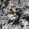 Some crazy rockchuck chinese guy who was on the climb next to Les is More. Someday.