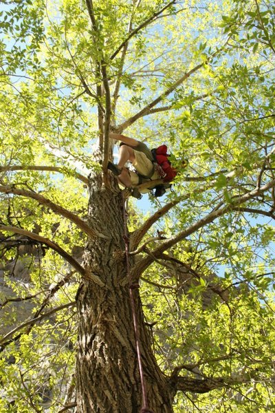 Climbing the tree to the tyrolean