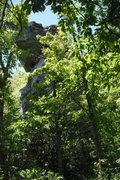 Rock Climbing Photo: Sitting Bear nestled behind the trees.
