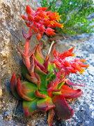 Rock Climbing Photo: Some plant life